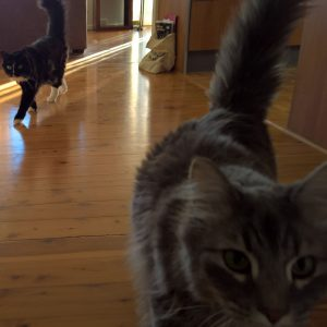 Max and Henry from Tweed Heads are very playful and love feeding time on our Pet Sitting visit