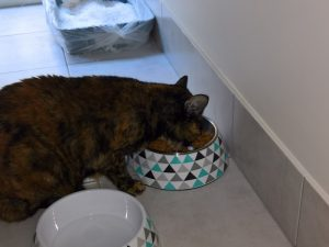 Frankie from Casuarina was a hungry girl during our recent Pet Sitting visits
