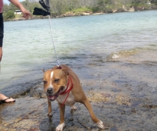 Little Ling Ling from Sydney loves her time down Cudgen Creek while on a Dog Minding visit