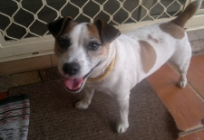 Alfie from Chinderah loves our Pet Sitting visit