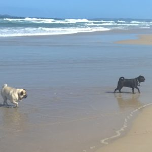 Milly and Elly from South Golden Beach love our Pet Sitting Service