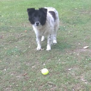 Old Dolly from Kingscliff thinks she still young enough th chase that ball