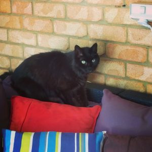 Gorgeous Kimba from Banora Point loves our Pet Sitting visits and is a regular